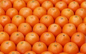 Обои pattern, fruits, oranges, ordered