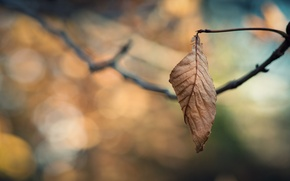 Картинка холод, грусть, осень, листья, ветки, одиночество, дерево, ветви, листок, фокус, ветка, листочки, листочек, листки, ветвь, …