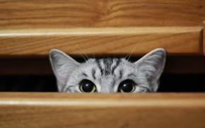 Картинка play, cat, cute