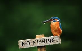 Картинка птица, табличка, kingfisher, alcedo atthis, обыкновенный зимородок, не рыбачить