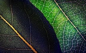 Картинка листья, макро, зеленые