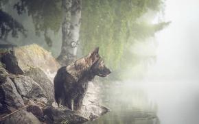 Картинка взгляд, туман, друг, собака