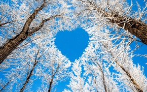 Картинка зима, небо, снег, деревья, ветки, природа, сердце, сердечко