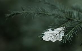 Картинка широкоэкранные, листочек, листочки, leaves, HD wallpapers, обои, дерево, dew, drops, trees, вода, wood, полноэкранные, background, ...