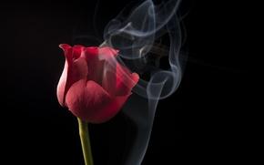 Картинка rose, Nature, flower, flowers, beauty, scarlet, roses, velvet