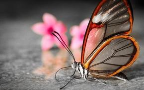 Картинка цветы, бабочка, размытость, крылышки, полупрозрачные