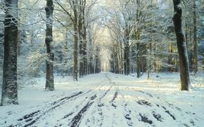 Картинка зима, дорога, снег, парк, оттепель