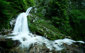 Картинка зелень, лес, вода, деревья, природа, ручей, камни, водопад, растения, trees, photo, rocks, поток forest, waterfall, ...