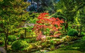 Обои трава, деревья, парк, Великобритания, беседка, кусты, Tatton Park, Knutsford