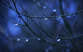 Обои вода, капли, макро, ветки, фон, дерево, почки