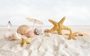 Картинка песок, пляж, ракушки, морская звезда, раковины
