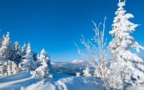 Картинка зима, снег, деревья, следы, природа, фон, дерево, обои, елки, wallpaper, nature, широкоформатные, background, snow, полноэкранные, …