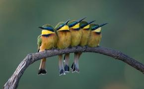 Картинка птицы, фон, природа