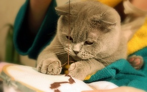 Картинка кошка, нитки, швея