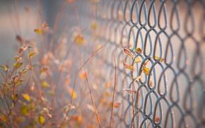 Картинка листья, фон, widescreen, обои, забор, размытие, ограда, ворота, ограждение, wallpaper, листочки, широкоформатные, листики, background, полноэкранные, …