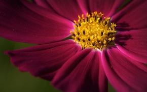 Картинка цветок, цветы, фокус, лепестки, лепесток, цветочки, широкоформатные обои, цветки, обои на рабочий стол, hd обои, …