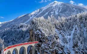Обои железная дорога, поезд, виадук Ландвассер, ели, горы, зима, кантон Граубюнден, снег, Альпы, Швейцария