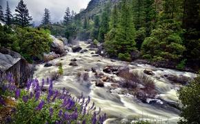Картинка лето, цветы, природа, река