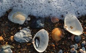 Обои пена, ракушки, морская, камушки