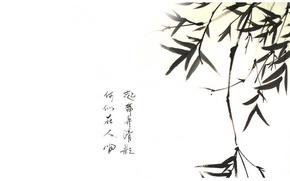 Картинка ветка, бамбук, иероглифы