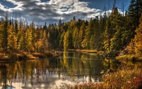 Картинка осень, лес, деревья, природа, озеро