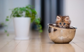 Обои кошка, кошенятко, котенок, кот, кастрюля
