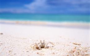 Обои море, лето, краб, отдых, песок