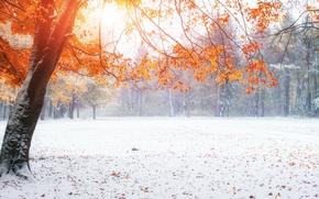 Обои Зима, снег, Природа, Осень, Деревья