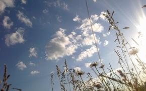 Картинка небо, трава, солнце, цветы, ромашки