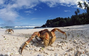 Картинка beach, sea, ocean, island, sand, coconut, seashore, crab