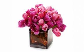 Обои purple, fresh, tulips, flowers, bouquet, тюльпаны, цветы