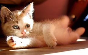 Картинка лежит, котёнок, солнце, cats, kitten, смотрит