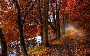 Картинка осень, лес, листья, деревья, природа, туман, озеро, отражение, forest, Nature, листопад, роща, тропинка, trees, autumn, ...