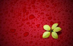 Картинка цветок, капли, желтый, красный фон