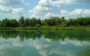 Картинка зелень, лес, солнце, пейзаж, природа, река