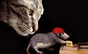 Обои кошка, каска, ситуация, крыса, морда, сыр, мышеловка, кот
