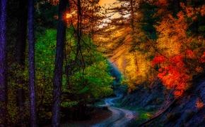 Картинка дорога, листья, пейзаж, осень. деревья