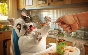 Картинка собака, корм, хозяин, обед