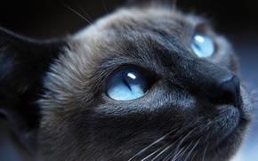 Обои Кошка, нос, глаза, cat, кот