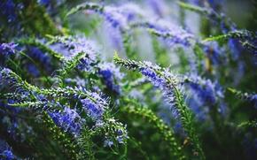 Картинка цветы, растения, сумрак, весна