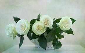 Картинка WHITE, FLOWERS, NATURE, FLOWER, ROSES