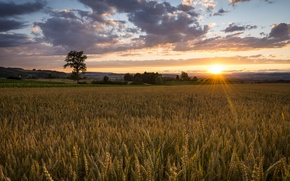 Картинка поле, природа, восход