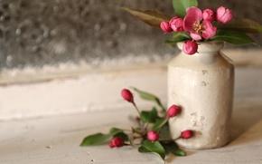 Картинка стиль, ваза, цветки, бутончики