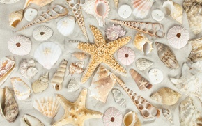 Обои sand, starfish, seashells, пляж, ракушки, песок