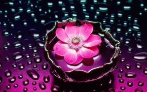 Обои ваза, вода, цветок