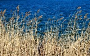 Картинка Вода, Трава, Голубой, Сухой