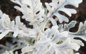 Картинка макро, белое, растение