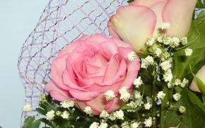 Картинка розы, букет, розовые. цветы