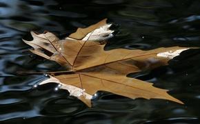 Картинка вода, блеск, Лист, красота