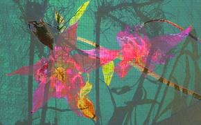 Картинка цветок, линии, краски, текстура, лепестки